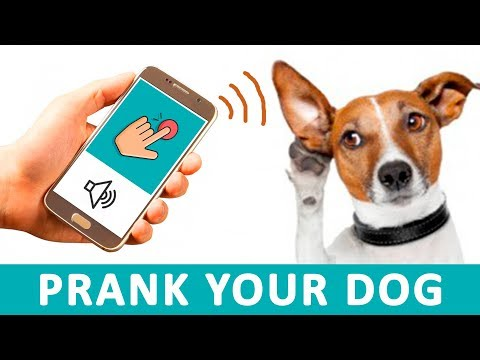 DOORBELL Sounds to Prank your Dog | Audio Toys for Dogs HD