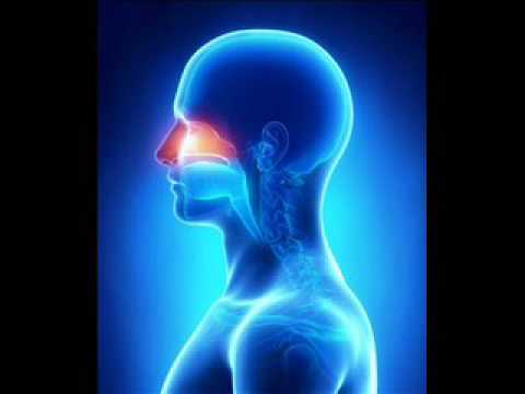 Nasal Passage Treatment | Stop Running Nose Binaural Beats Music | Entertainment Zone