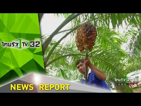 หนุนเกษตรกรอีสานปลูกปาล์ม   15-09-59   ชัดข่าวเที่ยง   ThairathTV