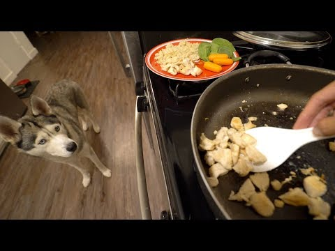 What Cooking Dinner With My Husky Looks Like!