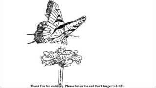 How to Draw Beautiful Butterfly and flower