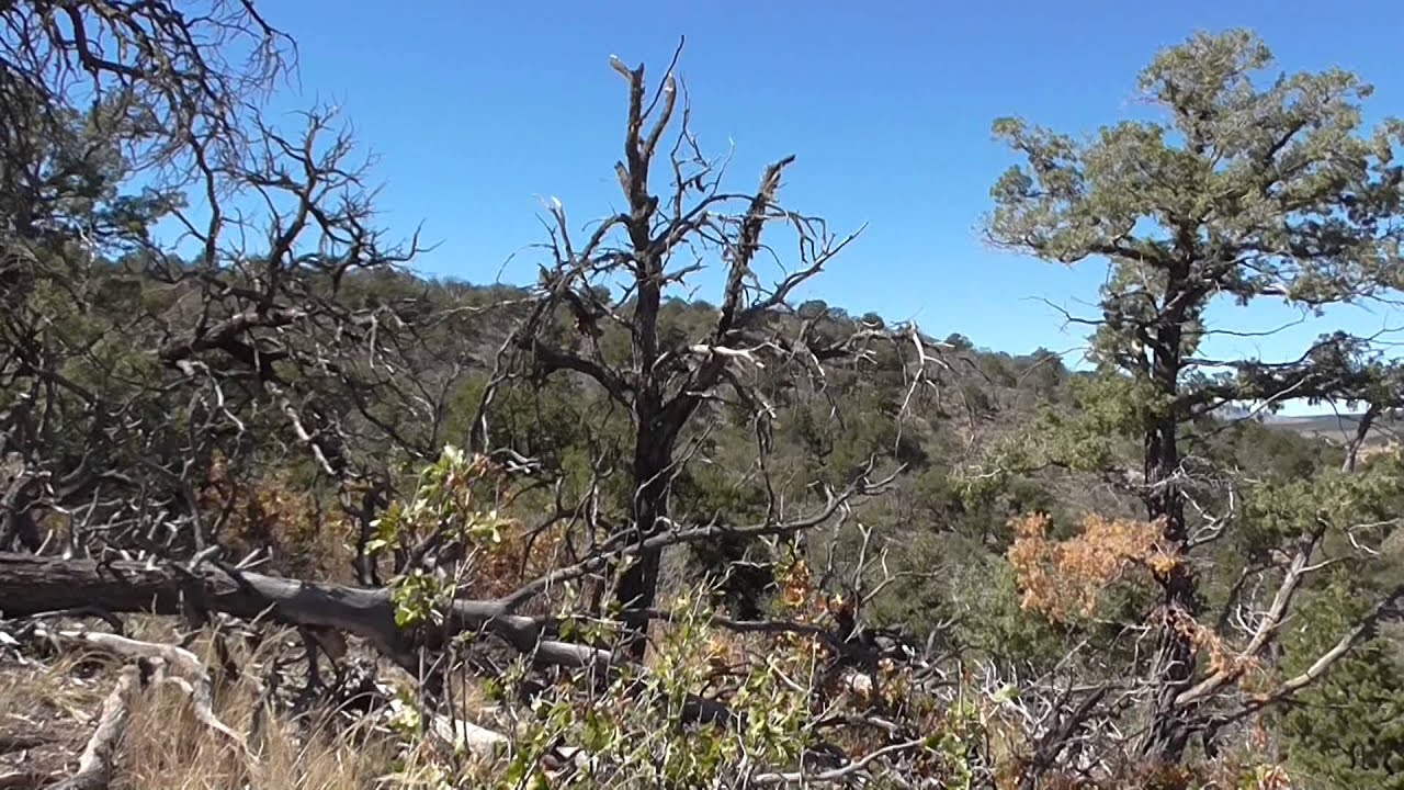 2014 New Mexico Cow Elk Hunt with Donald MacMullin