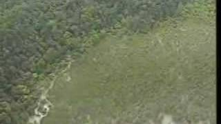 Tree Spirits: Flying Lemurs