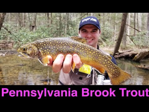 Pennsylvania Brook Trout Fishing