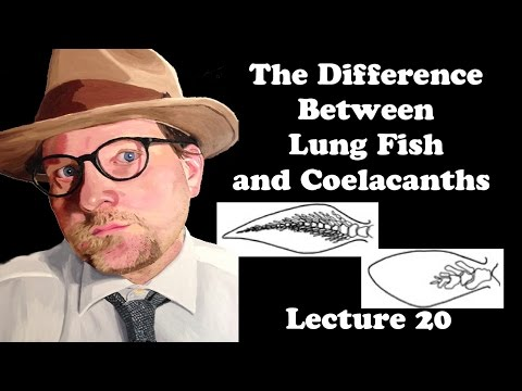 Lecture 20 The Difference Between Lung Fish And Coelacanths