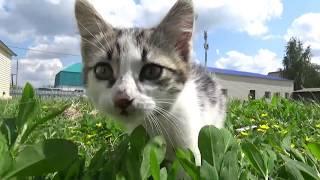 Котенок-мальчик в добрые руки - !!! ПРИСТРОЕН, СПАСИБО!!!