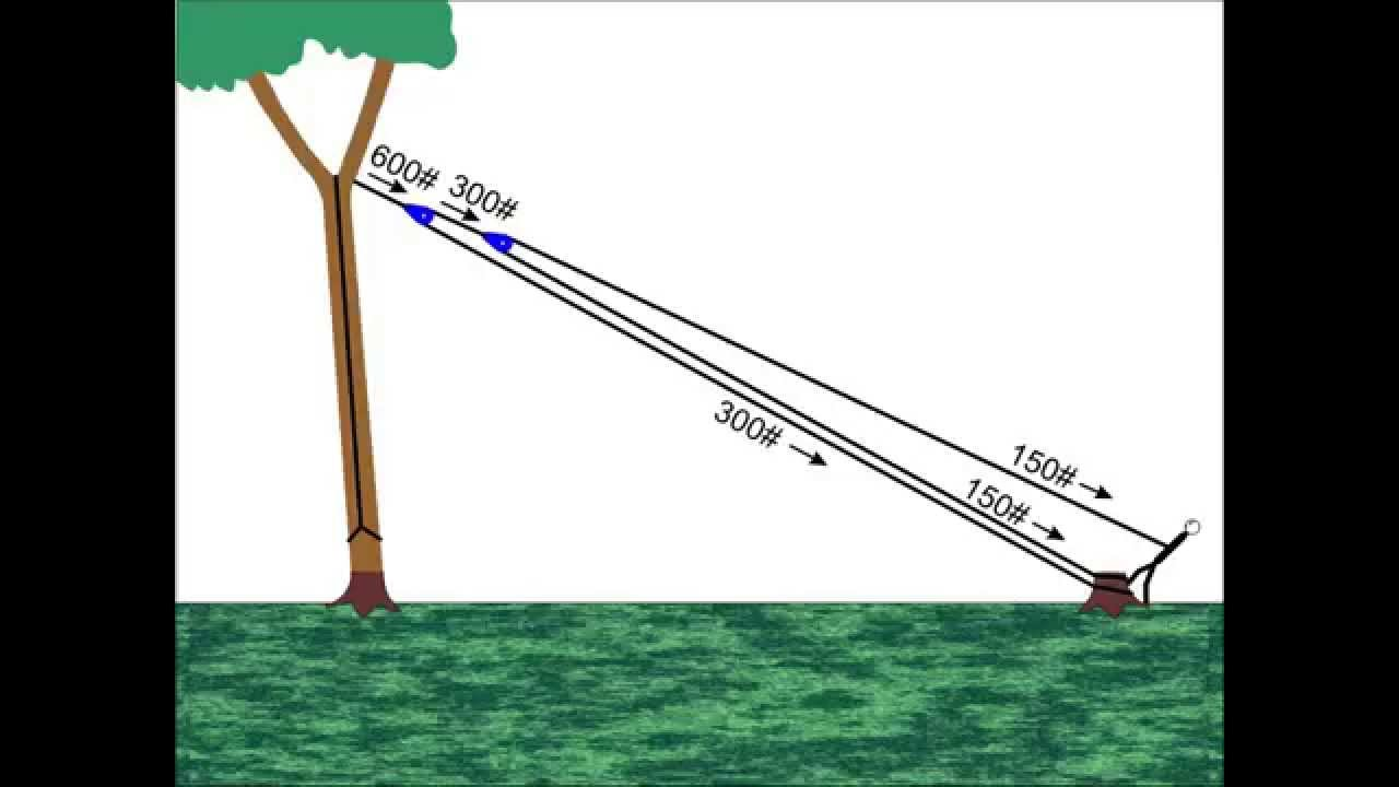 Pulling Trees Down With Rope - YouTube