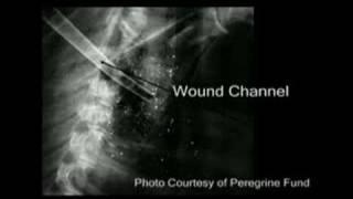 Copper vs Lead Bullet Fragmentation Study pt 2