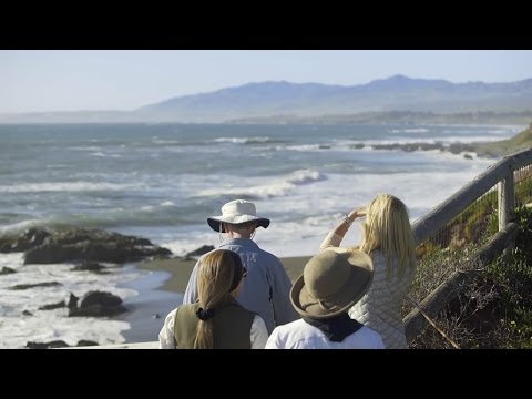Moonstone Beach: Where Elephant Seals Roam