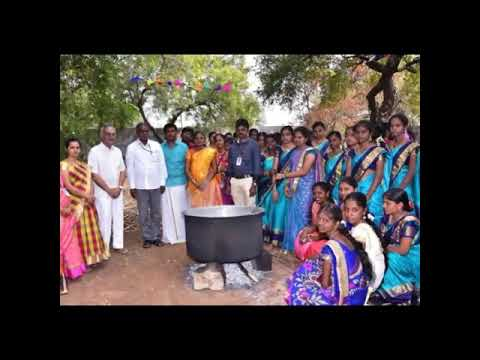 Gvn College Pongal Celebration By Royal B.com|2019