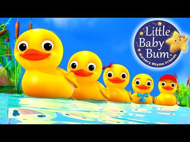 Numbers Song   Counting Five Little Ducks   Nursery Rhymes   Original Song By LittleBabyBum!