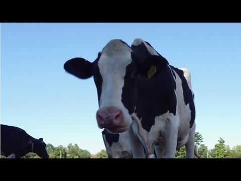 Feast TV: Milk It