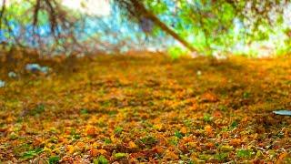 Silent vlog | ℎ'  19 | Plant v…
