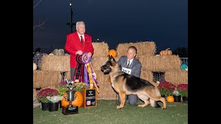 2020 GSDCA National  Best of Breed Males, GV, GVX, Best Puppy
