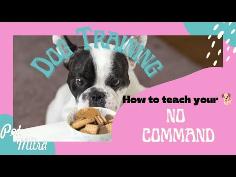 How to teach your dog No Command | training by Akram Khan