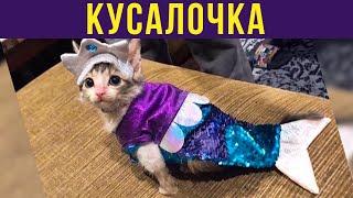 Приколы с котами. КУСАЛОЧКА | Мемозг #257