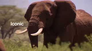 Introducing the Elephant Protection Initiative (High Res)