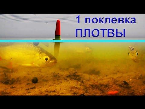 клев плотвы подводные съемки