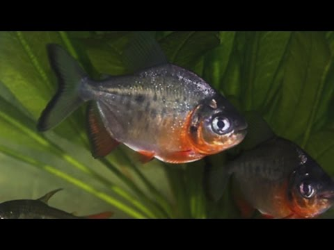 DNR Finding Aquariuam Plants, Fish In Minnesota Waters