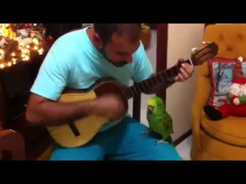 the best singing parrot ever.