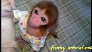Mini monkey, so cute! 可爱的袖珍猴
