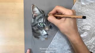 Cat pastel portrait by Marion Tubiana