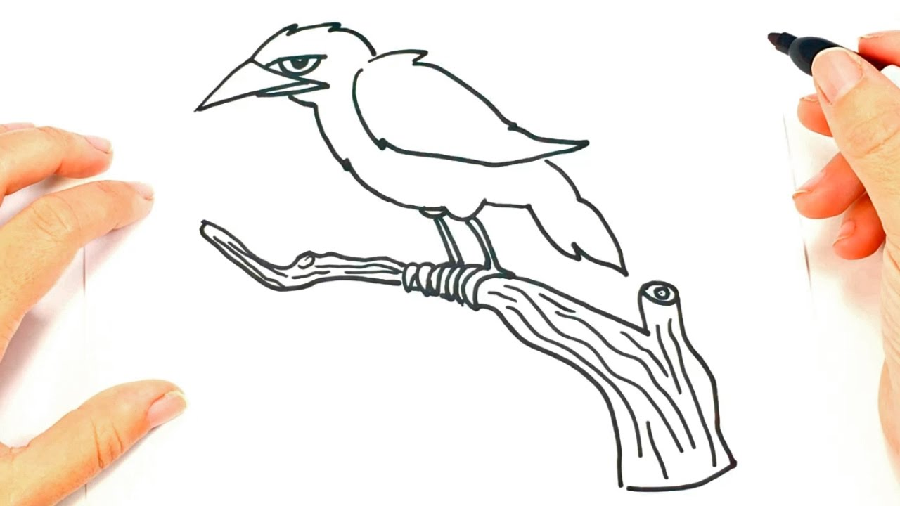 how to draw a crow step by step crow drawing lesson