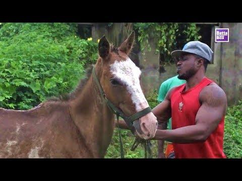 The Nigerian Horse Whisperer