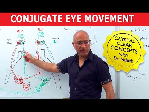 Saccades - Conjugate Eye Movement