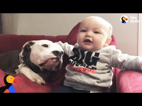 'Aggressive' Pit Bull Dogs Meet New Baby Brother & Help Dad Out of Depression | The Dodo
