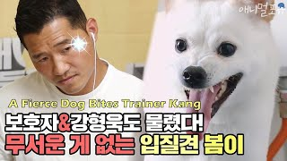 A Fierce Dog Bites Trainer Kang [Dogs Are Incredible]