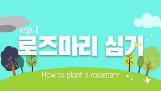 ep.1 렛츠플랜트 로즈마리심기편(planting ro…