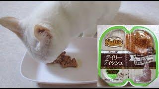【ニュートロ】デイリー ディッシュ サーモン&ツナ  キャットフード実食レビュー(Nutro Wet Cat Food Review)