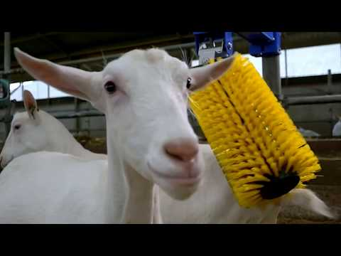 Modern Farming Technologies - Automatic Cow and Goat Brush, Cow Milking, Cattle Hoof Trimming, Cow C