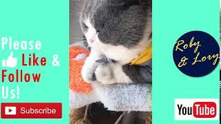 Try Annoying My Fat Cat Cute Kitten Video