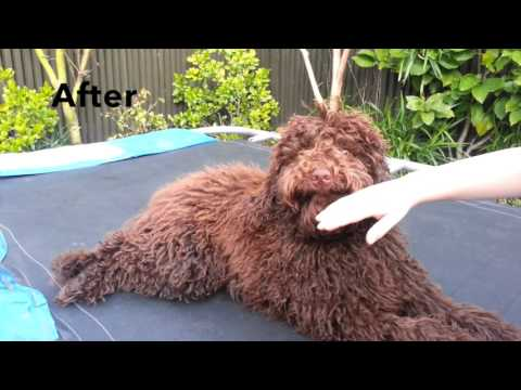 In Home Dog Training Melbourne - Before/After - Playful Biting