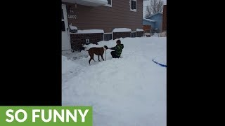 Dog steals his own leash from little boy to play in snow.