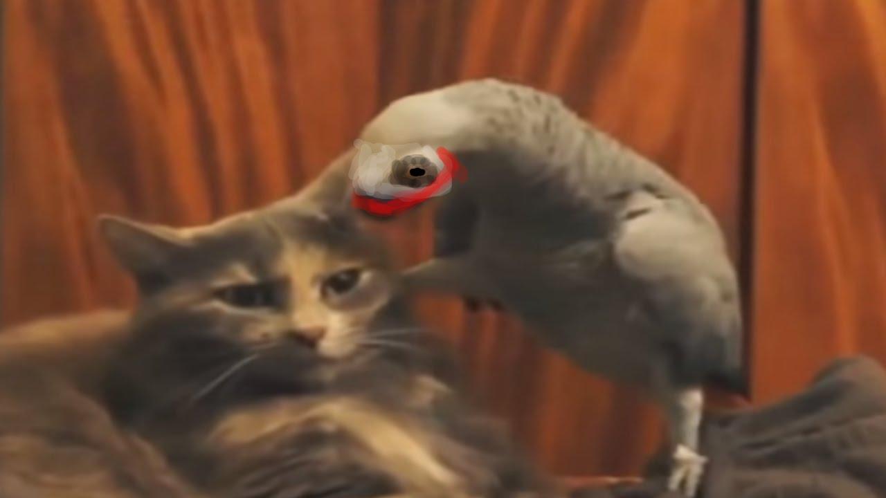 Попугай и кот джокера