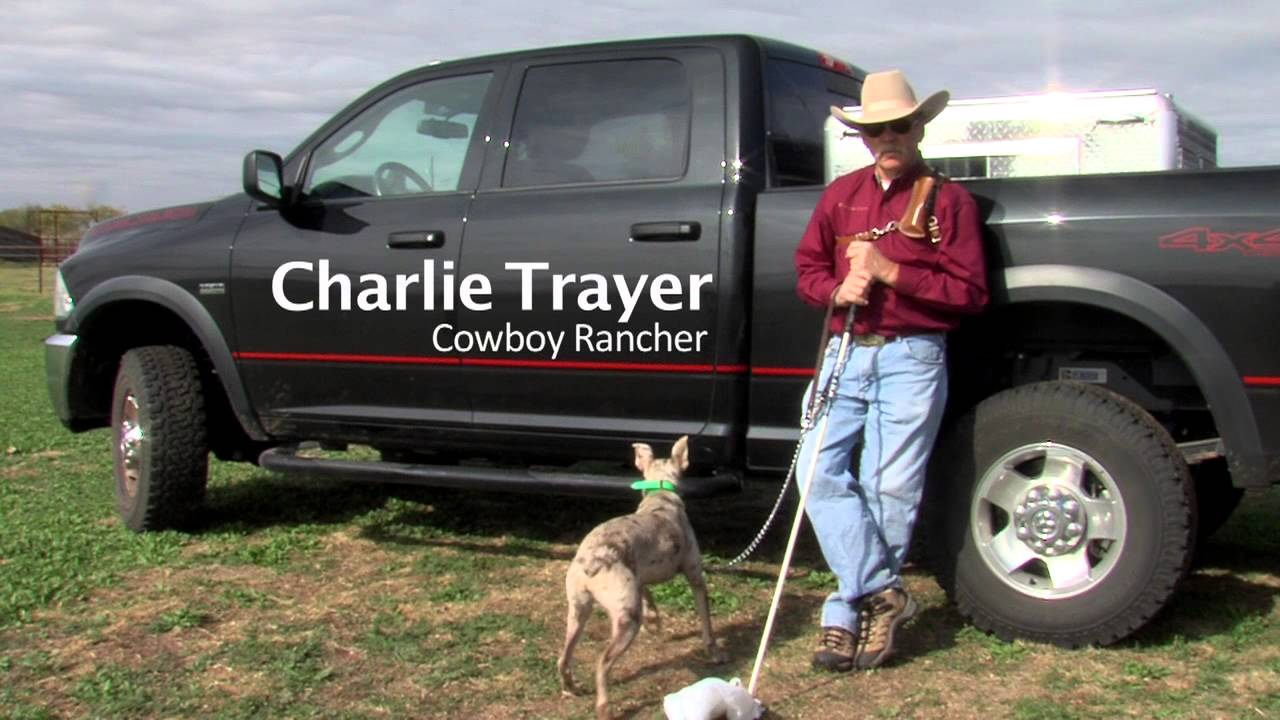 Hanging tree cow dogs for sale - Hanging Tree Cow Dogs For Sale 15