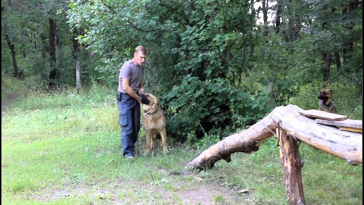 20 май 2014. Байра уккермарн оценка отлично хендлер рушечникова ирина предоставляю услуги хендлера (подготовка собаки к выставке, показ на выставке, помощь в записи на вы.