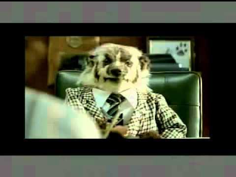 Johnson Automotive Badger Credit Report Youtube