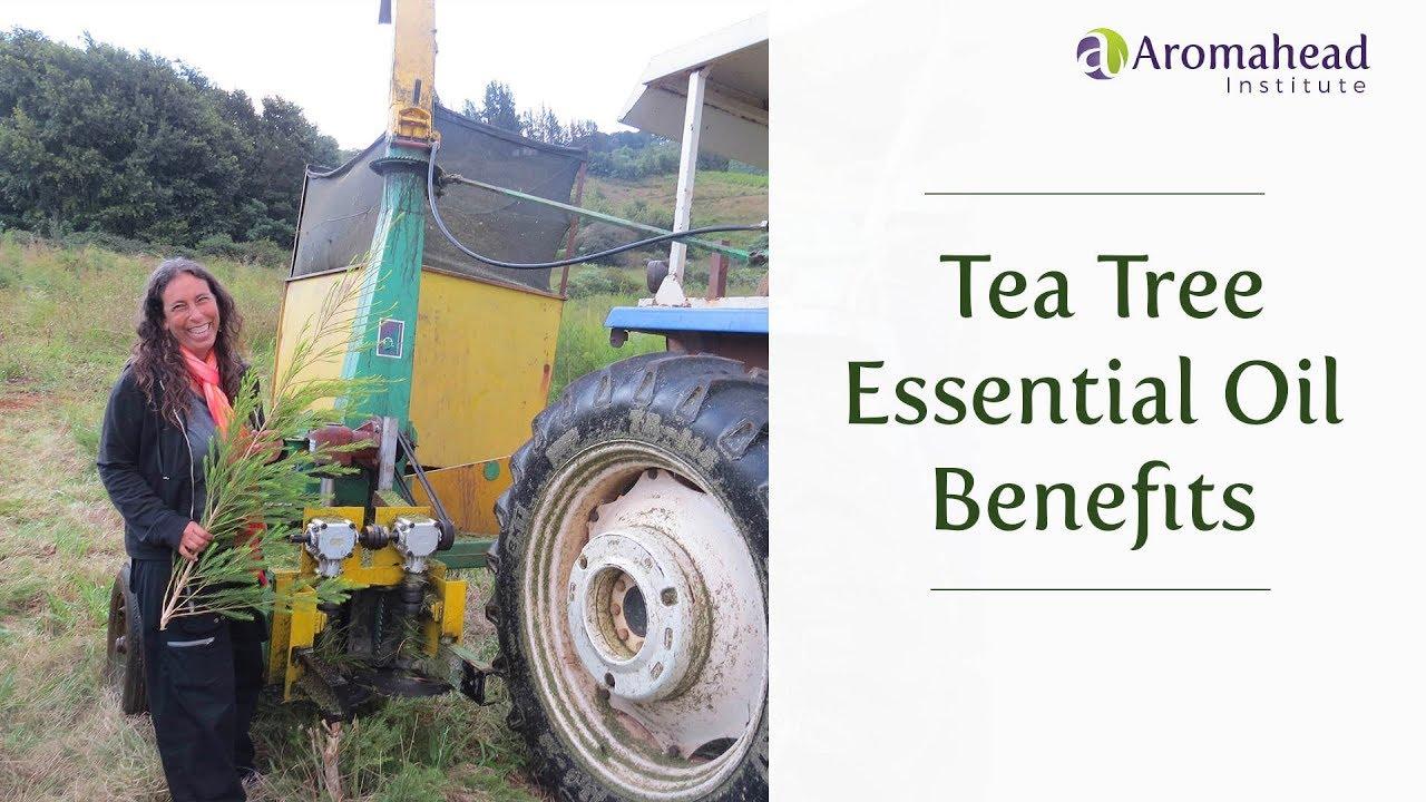 Tea Tree Essential Oil Benefits