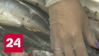 В Мурманске открылся социальный рыбный магазин - Россия 24