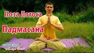 Как сесть правильно в позу Лотоса - Падмасана
