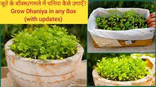 कोई भी डिब्बे में धनिया उगाएँ?How to Grow Coriander at Home(in 15 Days) Full Information|