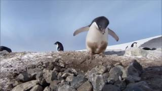 Пингвин преступник