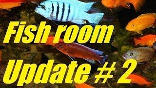 Fish Tank Update Video # 2 - Fish Room And Aquarium Breakdown