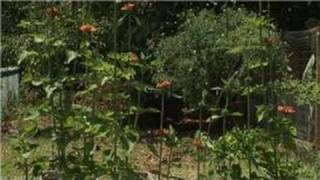 Herb Gardens & Box Gardening : Eclectic Garden Ideas