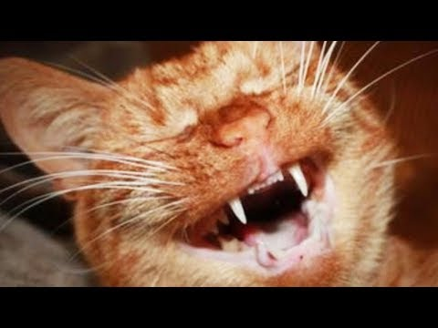 Funny Sneezing Cats 😹 Cute Cats Reaction [Funny Pets]