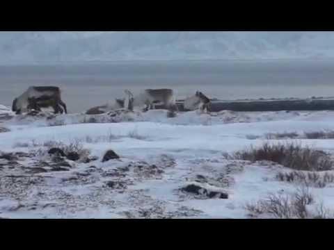 Norway Arctic Ocean trip